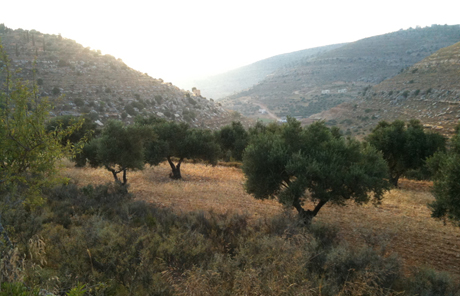 open-forum-oslo-palestine-wadi-idyll-nr-ain-qiniya-gma